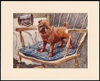 Brussels Griffon Little Dog In A Chair Charming Dog Print Mounted Ready To Frame