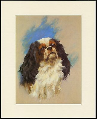 Cavalier King Charles Spaniel Head Study Mounted Dog Print Ready To Frame