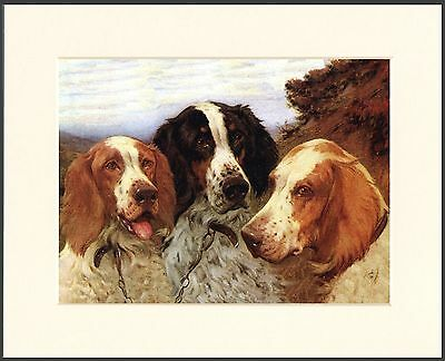 English Irish Red And White Setter Dogs Head Study Dog Print Ready To Frame