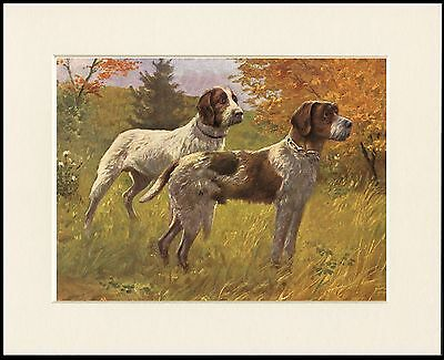 German Wirehaired Pointer Dogs Lovely Dog Print Mounted Ready To Frame