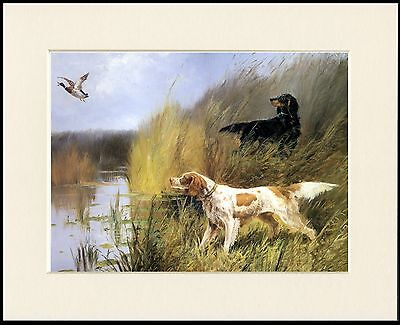 Gordon And Irish Red And White Setter Dogs Dog Print Mounted Ready To Frame