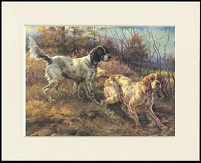 English Setter Two Dogs Lovely Dog Print Mounted Ready To Frame