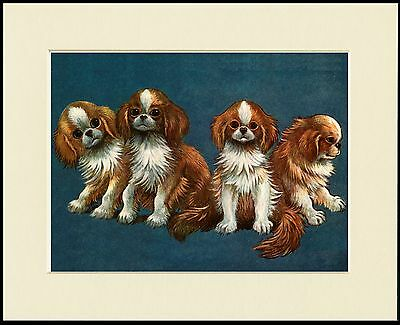 Japanese Chin Cute Group Of Dogs Dog Print Mounted Ready To Frame