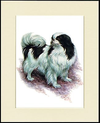 Japanese Chin Great Little Dog Print Mounted Ready To Frame