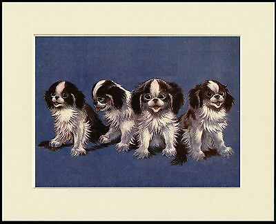 Japanese Chin Charming Little Dog Group Print Mounted Ready To Frame