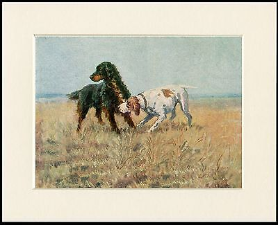 Gordon Setter And Pointer Dogs At Work Dog Print Mounted Ready To Frame