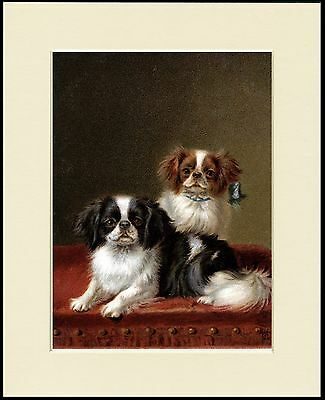 Japanese Chin Two Little Dogs On A Table Lovely Dog Print Mounted Ready To Frame