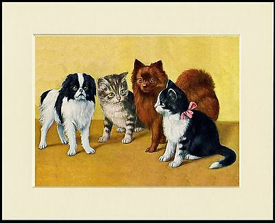 Japanese Chin Pomeranian And Cats Charming Dog Print Mounted Ready To Frame