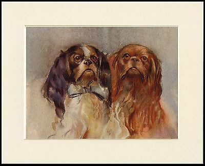 King Charles English Toy Spaniel Head Study Two Dogs Dog Print Ready To Frame
