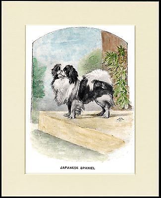 Japanese Chin Little Dog Lovely Print Mounted Ready To Frame