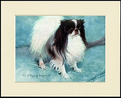 Japanese Chin Lovely Named Champion Dog Print Mounted Ready To Frame
