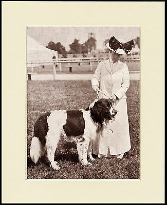 Newfoundland And Edwardian Lady Lovely Period Image On Dog Print Ready Mounted