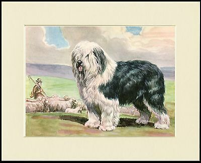 Old English Sheepdog And Flock Lovely Dog Print Mounted Ready To Frame