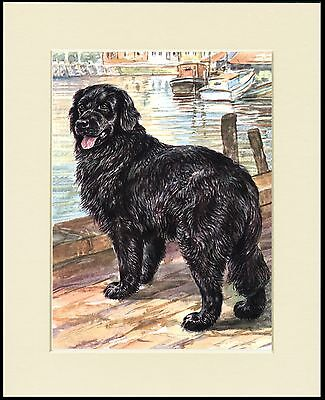 Newfoundland On Dock Lovely Dog Print Mounted Ready To Frame