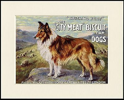 Rough Collie Dog Food Advert Lovely Dog Print Mounted Ready To Frame