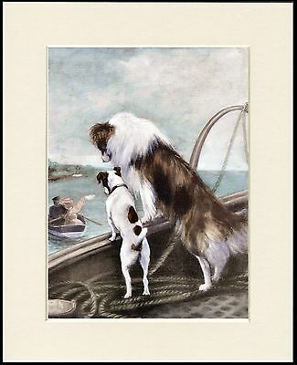 Rough Collie And Terrier  On Boat Lovely Dog Print Mounted Ready To Frame