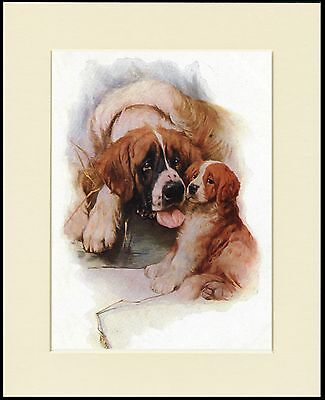 Saint Bernard Mother And Puppy Lovely Dog Print Mounted Ready To Frame
