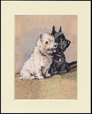 WESTIE TERRIER DOGS AND YOUNG GIRL DOG PHOTO PRINT MOUNTED READY TO FRAME