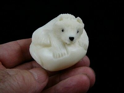 (tne-fox-302C) white Acrtic Fox TAGUA NUT Figurine Carving Vegetable ivory foxes