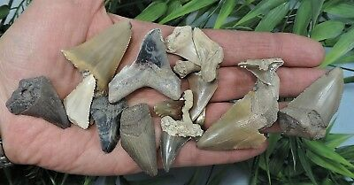 Lot Of 15 Sharks Teeth, Megalodon  Mako Great White.../ Fossil Sharks Tooth