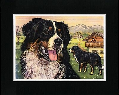 Bernese Mountain Dog Head Study Lovely Dog Art Print Matted Ready To Frame