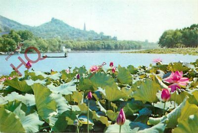 Picture Postcard:-China, West Lake, Lotus Flowers In Summer Breeze