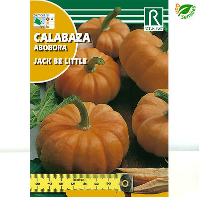 Calabaza Jack Be Little ( 3 gr / 30-35 semillas ) seeds - Muy Pequeña