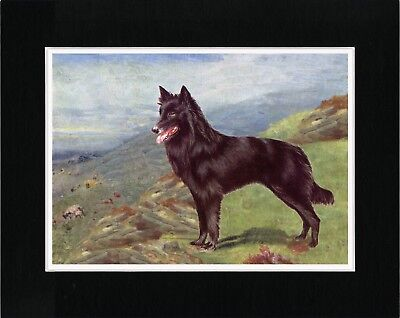Belgian Shepherd Lovely Old Style Dog Art Print Ready Matted