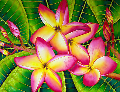 Jean-Baptiste Original Batik Silk Painting Of Frangipani Flowers