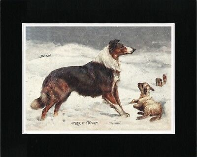 Border Collie Rescues Lamb In Snow Lovely Old Style Dog Art Print Ready Matted