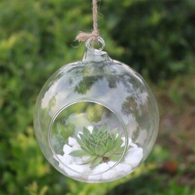 Small Hook Glass Ball Terrarium Air Potted Plant Display Pots House Decor