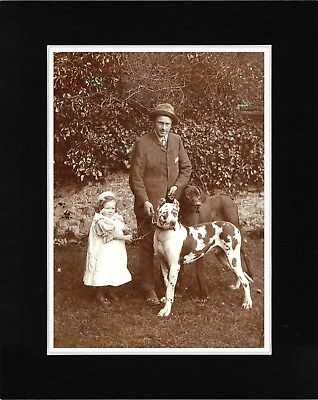Man Little Girl And Two Great Dane Dogs Vintage  Style Dog Print Ready Matted