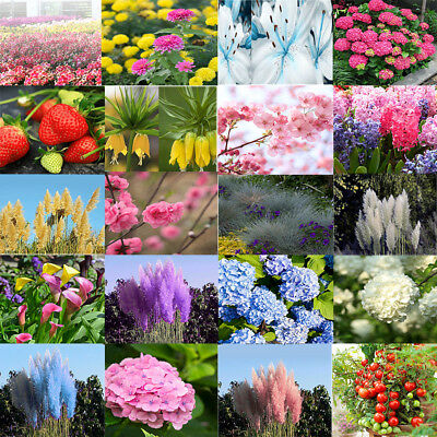 Mixed Packed Seeds Balcony Yard Garden Potted Bonsai Plants Flower Decoration HG