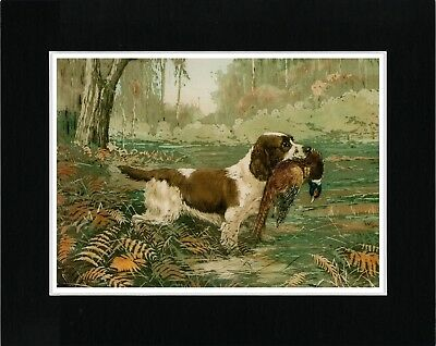 English Springer Spaniel And Bird Vintage Style Dog Art Print Ready Matted