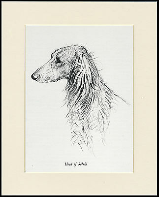 SALUKI HEAD STUDY LOVELY VINTAGE 1930'S DOG ART PRINT by KF BARKER READY MOUNTED
