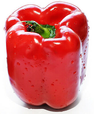 1 Pack 100 Red Sweet Pepper Seeds Paprike Capsicum Organic S041