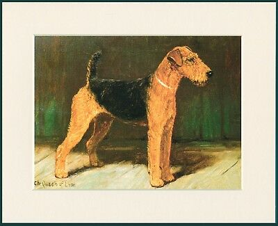 AIRDALE TERRIER VISCAN DOG FOOD ADVERT PRINT MOUNTED READY TO FRAME