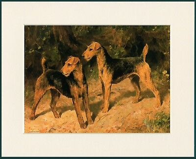 Airedale Terrier Two Dogs Great Dog Print Mounted Ready To Frame