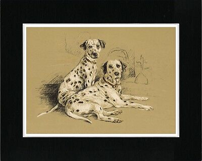 Two Dalmatian Dogs Lovely Vintage Style Dog Art Print Ready Matted