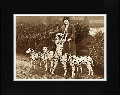 Lady And Her Dalmatian Dogs Lovely Vintage Style Dog Photo Print Ready Matted