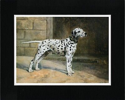 Dalmatian Lovely Vintage Style Dog Art Print Matted Ready To Frame