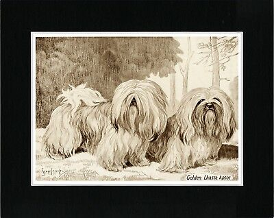 Lhasa Apso Lovely Vintage Style Dog Art Print Ready Matted