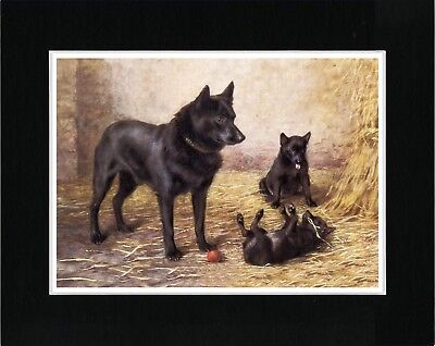 Schipperke Mother And Pups Vintage Style Dog Art Print Matted Ready To Frame