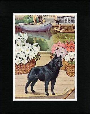Schipperke On A Barge Lovely Vintage Style Dog Art Print Matted Ready To Frame
