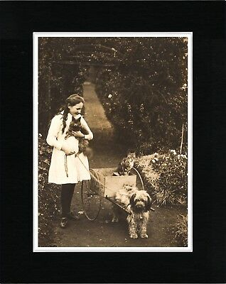 Girl And Tibetan Terrier Harnessed To Cart Vintage Style Dog Print Ready Matted