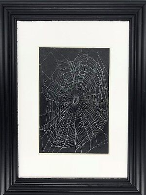 Spider Web Preserved in a Matted 5 x 7 Black Frame Handmade