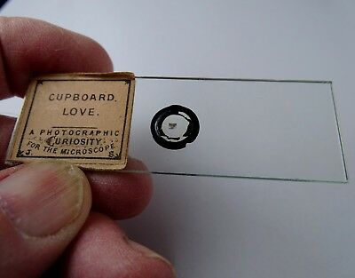 Fabulous Antique Victorian 1860 Microphotograph Microscope Slide by John Stovin