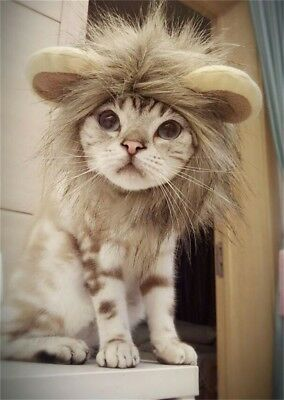 Cat Lion Mane Wig Costume Hat for Cats and Small Dogs, Pet Halloween, Christmas