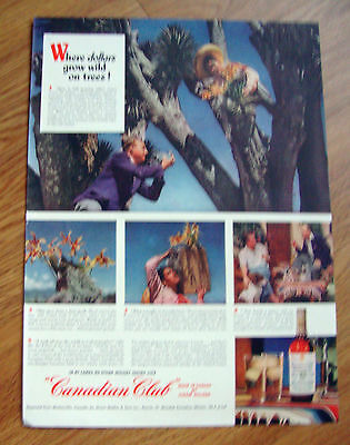1948 Canadian Club Whiskey Ad Wild Orchids Chiapas Mexico 1948 Lucky Strike Ad