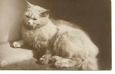 Vintage  Postcard of Long-haired cat. Unused.  Good Condition. Real Photograph